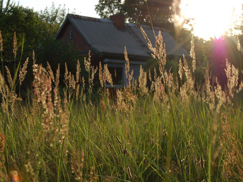 Haus hinter hohem Gras