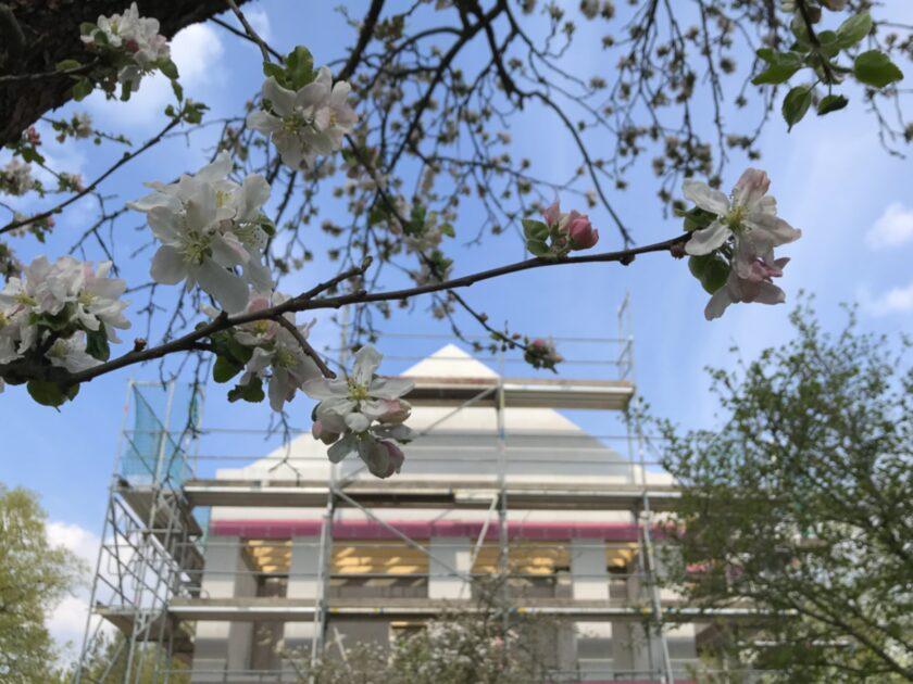 Rohbau hinter Apfelblüten
